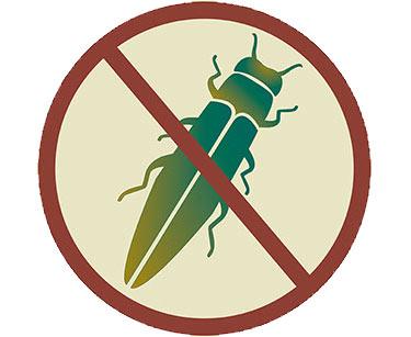 Illustration depicting No Ash Borer allowed