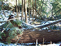 Photo of downed trees