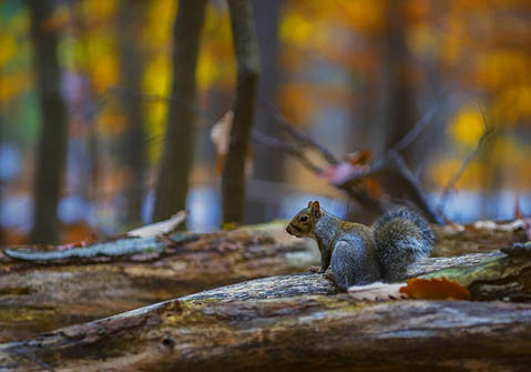 Photo of Squirrel by Larry Helms
