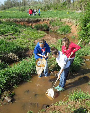 Students standing in a stream with nets collecting samples.