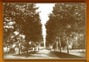 Tree-lined boulevard, 1920's