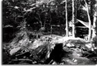 Besley family campsite, Patapsco Forest Reserve, 1921