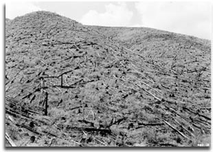 Hillsides cleared of trees during the early 1900's