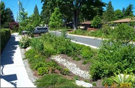 Bioretention image 3