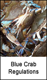Blue Crab Regulations