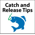 Catch and Release Tips