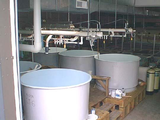 Photo of Joseph Manning Hatchery larval tanks.