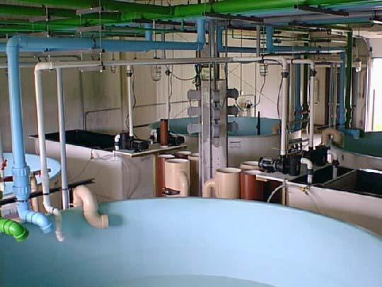 Photo of Joseph Manning Hatchery spawning tanks.