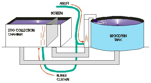 Diagram of the spawning tank system.
