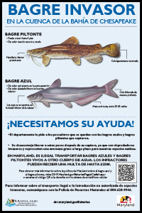 invasive catfish poster_14x21_ES.jpg