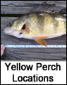 Yellow Perch Fishing Spots