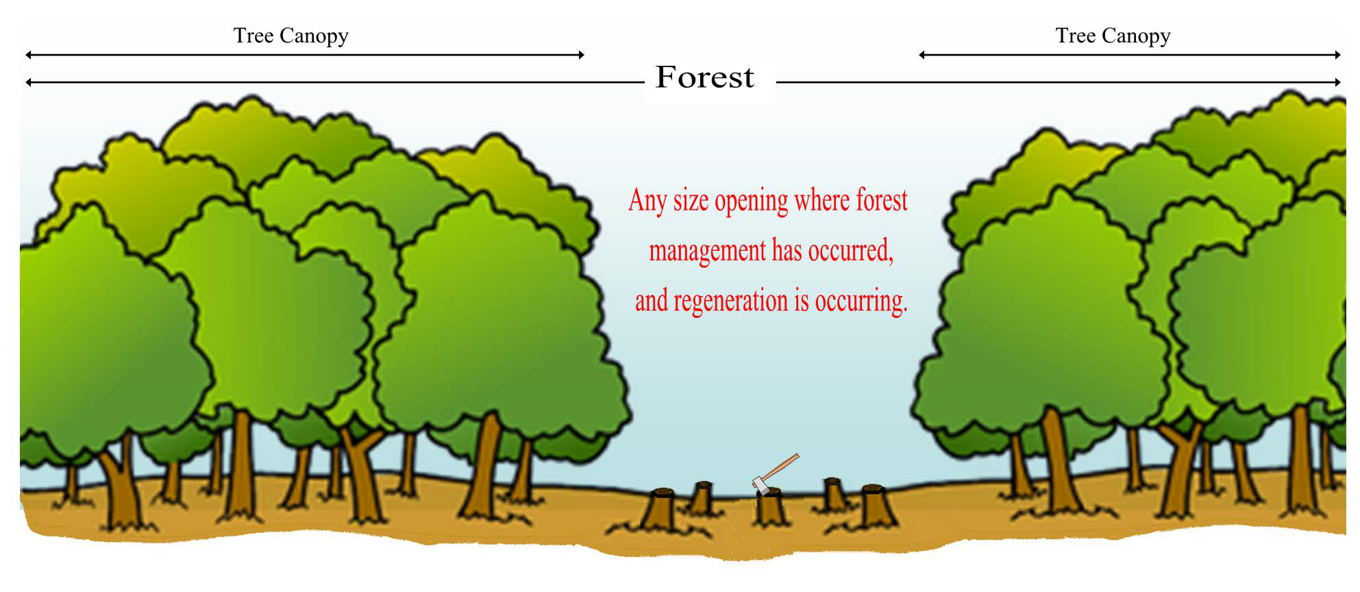 Forest Tree Data