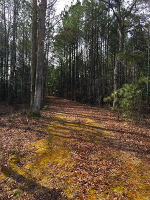 A Maryland Forest Legacy Program Property