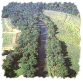 [A prime example of a Riparian Forest Buffer, an area of the Monocacy River Frederick County.]