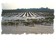 [Example of runoff from a field.]