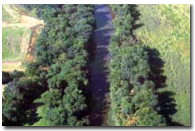 Photo of the fields at the nursery and Forest Service logo