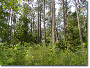 Photo of forested land