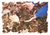 [Picture of a person holding dirt from the forest floor, showing the many things that can be found in the mix.]