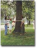 [A group of people measuring a tree.]