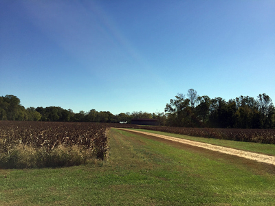 Friendship Farm - Corn fields and a dirt road