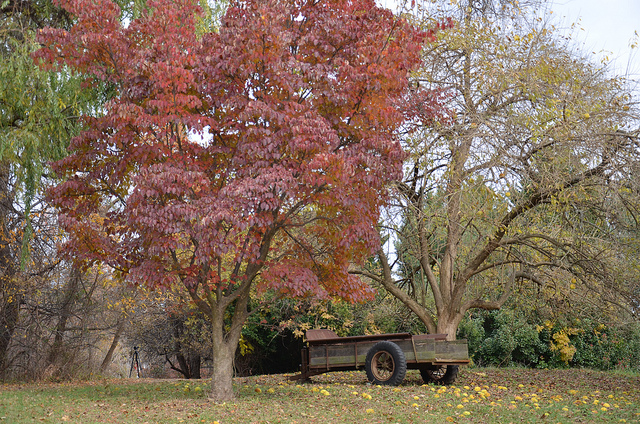 A wagon sitting in a filed by tree in the fall.
