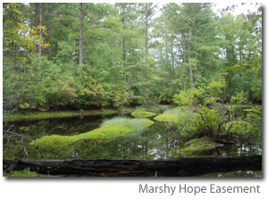 Photo of Marshy Hope Easement
