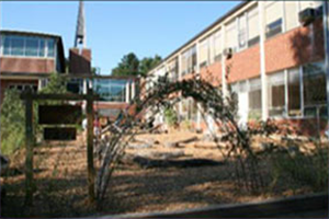 Tree Branch Tunnel at Brown Memorial Weekday School