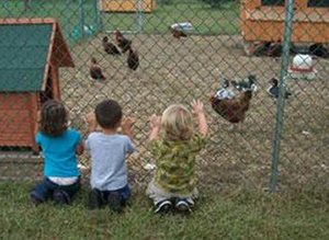 Observing the Chickens at Friends Forever Learning Center