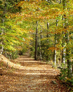 Scenic trail in Calvert Cliffs State Park