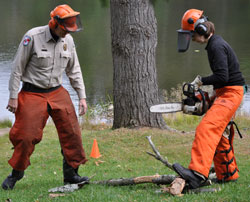 Park maintenance employees sawing trees