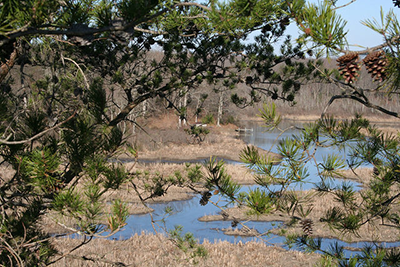 Scenic wetland in Merkle Wildlife Sanctuary