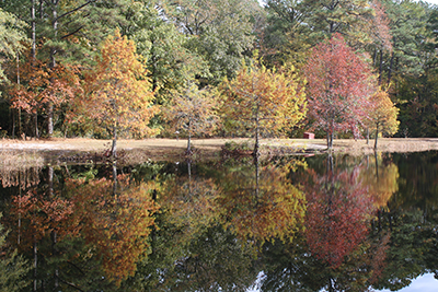 Fall Foliage at Pocomoke River State Park