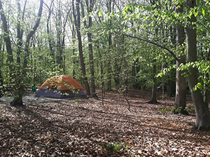 Tent Camping in Tuckahoe State Park