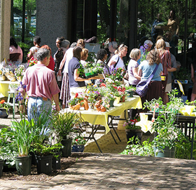 Annual Spring Plant Sale hosted by the Friends of Tawes Garden