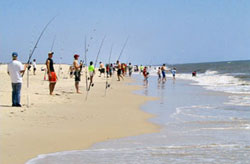 Guests Fishing On Ateage State Park Beach
