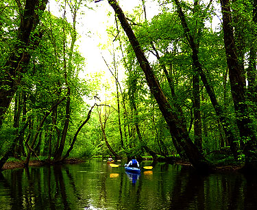 Man Kayaking in Creek