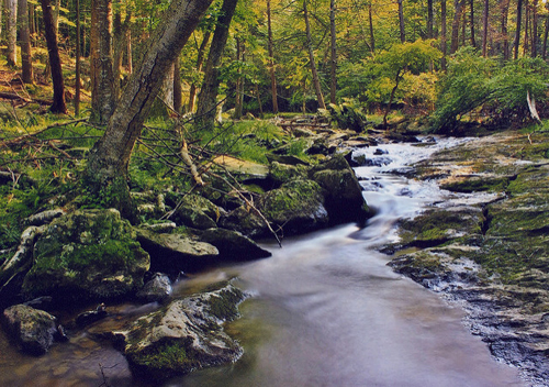 Image of a stream in the woods.