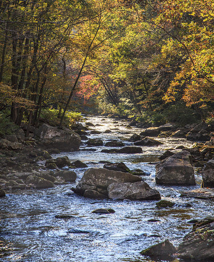 Fall on the Savage River by Steve Kling