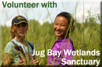 Volunteer with Jug Bay Wetlands Sanctuary