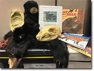 Black Bear Education Trunk Contents