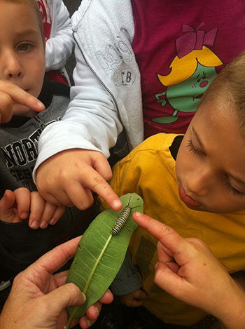 Students inspecting caterpillar on a leaf by Caroline Blizzard