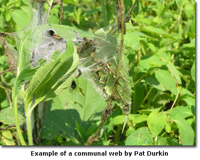 Example of a communal web by Pat Durkin