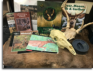 White-tailed Deer Education Trunk contents