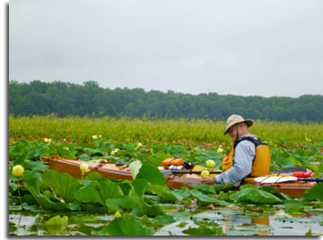 Kayaking Mattawoman Creek Natural Area, photo byu Julie Kiang
