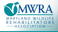 Maryland Wildlife Rehabilitators Association logo