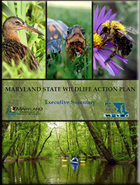 Cover of State Wildlife Action Plan Executive Summary