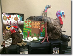 Photo of Wild Turkey Education Trunk contents