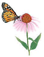Monarch butterfly on Coneflower illustration