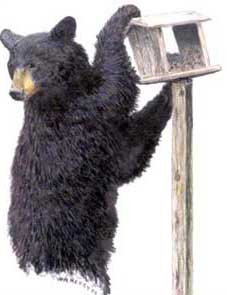 Illustration by Wade Henry of lack bear climbing bird feeder