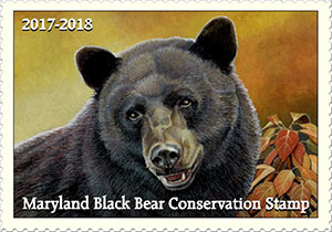 2017-2018 Maryland Black Bear Conservation Stamp winning design - by Steve Oliver